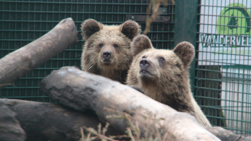Wildwood Kent prepares for a 'beary' special arrival