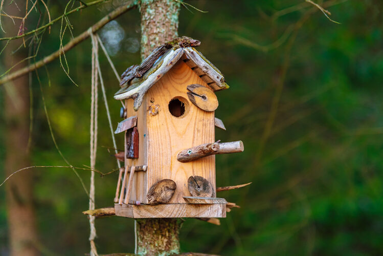 DIY wildlife action – help our wildlife from home