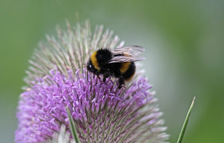 Top tips to welcome wildlife to your back garden